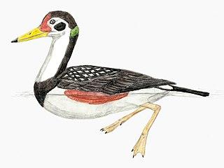 <i>Vegavis</i> Extinct genus of birds