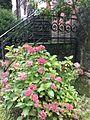 Villa Haas Sinn Hortensien.jpeg