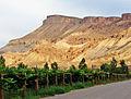 Vineyards below Mt Garfield, Palisade, CO 9-13 (22576399959).jpg
