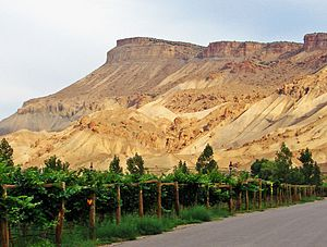 Vineyards below Mt Garfield, Palisade, CO 9-13 (22576399959).jpg