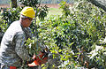 Virginia National Guard soldiers clear fallen trees 110828-A--336.jpg