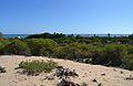 Vista de la mar des de les dunes, Guardamar del Segura.JPG