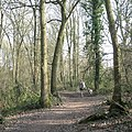 Walking in Walkwood Coppice, Redditch, Worcestershire - geograph.org.uk - 3946842.jpg