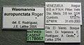 Wasmannia auropunctata casent0178667 label 1.jpg