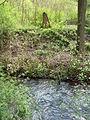 Wasserstein Frankeneck 2.jpg