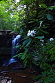 Waterfalls-hills-creek-rhododendrons - West Virginia - ForestWander.jpg