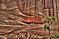 White House Ruins - Canyon de Chelly National Monument.jpg