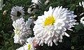 Whitening flower.jpg