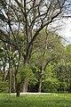Wiese unter Baeumen Botanischer-Garten Muenchen-3.jpg