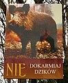 Wild Boar Swinoujscie.JPG