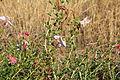Wild Flowers (11519942865).jpg