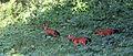 Wild dogs by Joseph Lazer.jpg