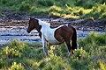 Wild pony.jpg