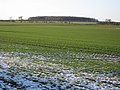 Winter Wheat near Grange Farm - geograph.org.uk - 1635083.jpg