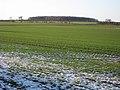 Winter Wheat near Grange Farm - geograph.org.uk - 1635083.jpg