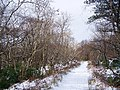 Winter in the woods - geograph.org.uk - 1150433.jpg