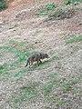 Wolf - 2.jpg