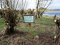 Woodland Management at Oxford Island 1 - geograph.org.uk - 748622.jpg