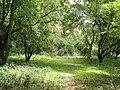 Woodland path, on Harrowdown Hill - geograph.org.uk - 1439345.jpg