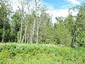 Woodlands (6167833626).jpg