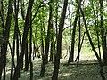 Woods in St. Norbert Provincial Park.jpg