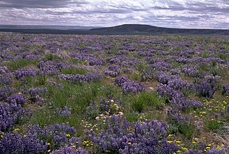 High Desert Discovery Scenic Byway - Image: Wright's Point near Burns, Oregon