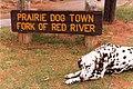 Yeah A Dog (Texas 1987) (3753009399).jpg
