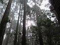 Yemakan Trail 野馬瞰步道 - panoramio.jpg