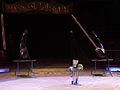 Zalophus californianus im Zirkus 1.JPG