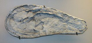 Zenaspididae family of fishes (fossil)