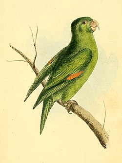Zoological Illustrations Volume I Plate 1.jpg