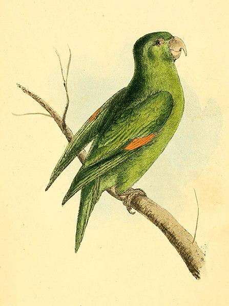 File:Zoological Illustrations Volume I Plate 1.jpg