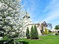 Zza kwitnących drzew..JPG