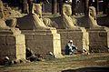 Ägypten 1999 (265)Tempel von Luxor- Sphingen-Allee (27723914503).jpg