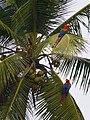 Île du Salut, Französisch Guyana (11928512334).jpg