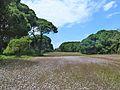 Δάσος Στροφυλιάς 02 - Strofylia Forest 02.jpg