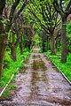 Ботанічний сад Житомирського національного агроекологічного університету.jpg