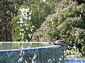 Ботанічний сад ім. М.Гришка IMG 7023.jpg