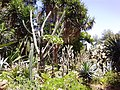 В алжирском ботаническом саду - panoramio.jpg