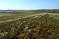 В окрестностях горы Белюнтау. Вид в северо-западном направлении - panoramio.jpg