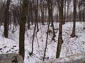 Зимний овраг - panoramio.jpg