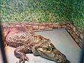 Зоологічний парк - аллигатор.jpg