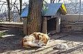 """Куче како дел од манастирот """"Св. Ѓорѓи"""" во Неготино.JPG"""