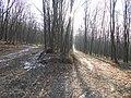 Лісова дорога, Бучач 1.jpg