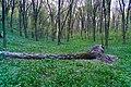 Ліс який насадив Бог навесні.jpg