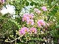 Нікітінський ботанічний сад, квіти44.jpg