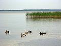 Озеро Світязь. 05.JPG