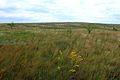Оренбургская степь в июне - panoramio.jpg