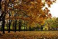 Осень Украина.JPG