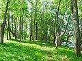 Парк возле усадьбы muižas parks (2) - panoramio.jpg